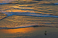 Surfer at sunset Kuta Beach, Legian Bali,aerial view,