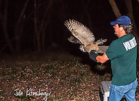 2013-09-06_WILDLIFE_PHS_Release of Great Horned Owls
