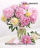 Alfredo, FLOWERS, BLUMEN, FLORES, photos+++++,BRTOLMN54809,#f#, EVERYDAY