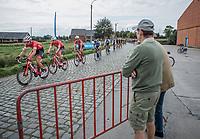 Peloton led by Team Trek-Segafredo over the cobbles<br /> <br /> 103th Kampioenschap van Vlaanderen 2018 (UCI 1.1)<br /> Koolskamp – Koolskamp (186km)