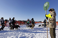 """Sunday, March 4, 2012  Maryann Capps holds a """"Stop/Go"""" sign at the restart of Iditarod 2012 in Willow, Alaska."""