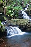 USA, HI, near Hilo, Hawaii Tropical Botanical Garden, Onomea Falls
