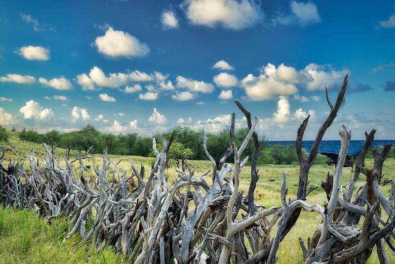 Driftwood fence, Hawaii, the big island