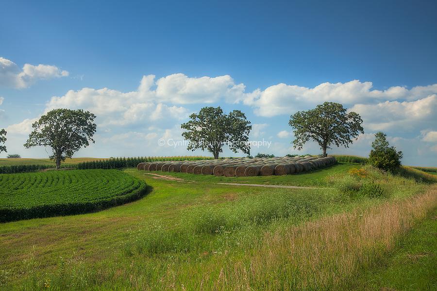 Trees and bales Lanesboro, MN area.