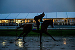 BALTIMORE, MD - MAY 18: Justify gallops with Humbert Gomez aboard as he completes final preparations for the Preakness Stakes at Pimlico Racecourse on May 18, 2018 in Baltimore, Maryland. (Photo by Alex Evers/Eclipse Sportswire/Getty Images)