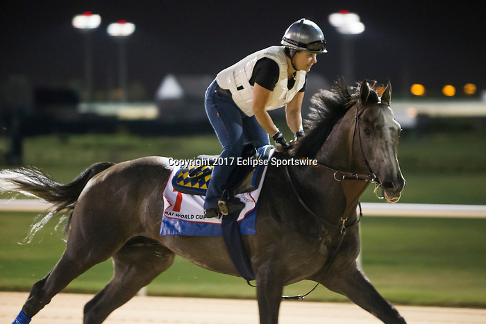 DUBAI,UNITED ARAB EMIRATES-MARCH 24: Arrogate,trained by Bob Baffert,exercises in preparation for the Dubai World Cup at Meydan Racecourse on March 24,2017 in Dubai,United Arab Emirates (Photo by Kaz Ishida/Eclipse Sportswire/Getty Images)