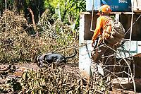 BRUMADINHO, MG, 30.01.2019: ROMPIMENTO DA BARRAGEM EM BRUMADINHO. Bombeiros trabalham com ajuda de cãozinho Resgate, de SP,  na busca por pessoas,  apos desastre ambiental na represa da Mineradora  Vale, em Corrego do Feijao-Brumadinho, região metropolina de Belo Horizonte, MG, na manhã desta quarta feira (30) (foto Giazi Cavalcante/Codigo19)