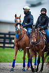 October 30, 2020: Red King, trained by trainer Philip D'Amato, exercises in preparation for the Breeders' Cup Turf at Keeneland Racetrack in Lexington, Kentucky on October 30, 2020. Alex Evers/Eclipse Sportswire/Breeders Cup
