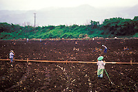 Sugar cane plantation workers in field, Koloa, Island of Kauai