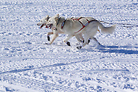 Sunday, March 4, 2012  Jim Lanier dogs on Long Lake at the restart of Iditarod 2012 in Willow, Alaska.