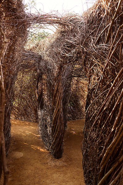 """May 8, 2015. Chapel Hill, North Carolina.<br />  Local sculptor Patrick Dougherty installed his work """"Homegrown"""" in the main yard of the North Carolina Botanical Gardens. The North Carolina Botanical Gardens encompass acres of plant habitats native to the state, as well nature trails for walking and recreation. <br />  Outsiders tend to lump Chapel Hill with nearby Durham, but the more sensible pairing is with Carrboro, the adjacent town that was once a mere offshoot known as West End. Even today the transition from Chapel Hill, anchored by North Carolina''s flagship public university, into downtown Carrboro is virtually seamless."""