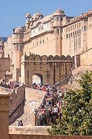 Amber (or Amer) Palace, near Jaipur, Rajasthan, India.  Two-way Elephant Traffic on the Path to and from the Sun Gate (Suraj Pole), Entrance to the Main Courtyard.