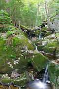 Fleming Flume on Elephant Head Brook in Carroll, New Hampshire during the summer months.