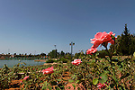 Israel, Sharon region. The Rose Garden at Park Ra'anana