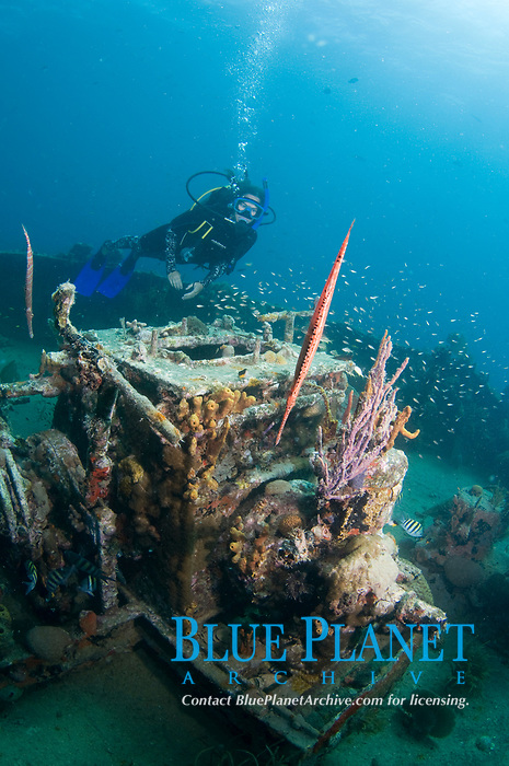 A diver exploring the wreck of the M/V River Taw, St. Kitts, Caribbean.