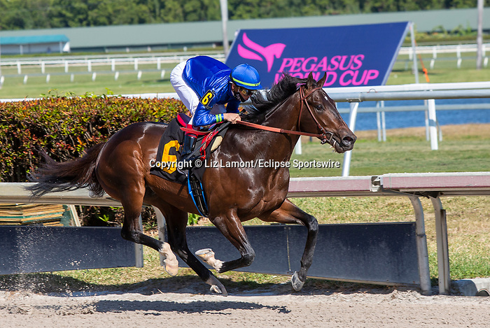 January 23, 2021:  #6 Prevalence with jockey Tyler Gaffalione on board, breaks his maiden at Gulfstream Park in Hallandale Beach, Florida.  Liz Lamont/Eclipse Sportswire/CSM