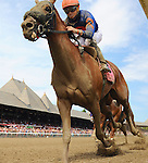 Mind Your Biscuits (no. 8), ridden by Joel Rosario and trained by Robert Falcone Jr., wins the 23rd running of the grade 2 Amsterdam Stakes for three year olds on July 30, 2016 at Saratoga Race Course in Saratoga Springs, New York. (Bob Mayberger/Eclipse Sportswire)