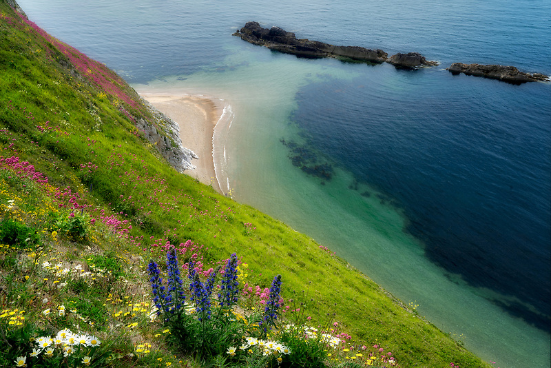 Wildflowers and  Coastline. Man O War Bay. Dorset Coast. Jurassic Coast, England