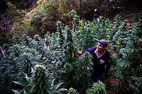 Marijuana, business or culture? Mexico.