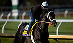 November 5, 2020: Title Ready, trained by trainer Dallas Stewart, exercises in preparation for the Breeders' Cup Classic at Keeneland Racetrack in Lexington, Kentucky on November 5, 2020. Alex Evers/Eclipse Sportswire/Breeders Cup