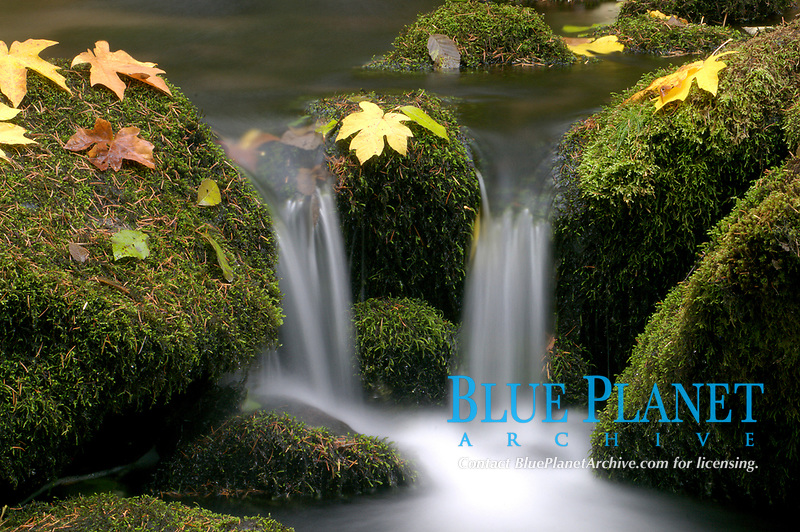 Water cascades down a mountain stream in Washington State.