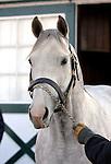 17 January 2010.   Kentucky Stallion Farms.  Unbridled Energy at Crestwood Farm.