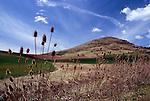 Steptoe Butte seen from Palouse Hills, WA