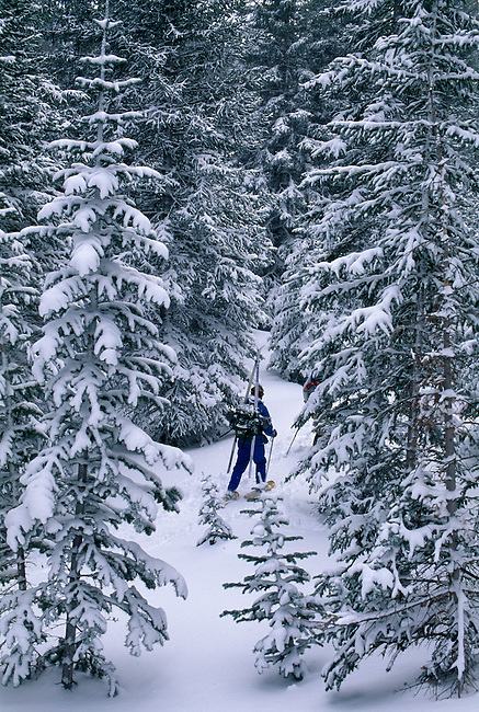 Snowshoeing in the deep forest of Rocky Mountain National Park, Colorado