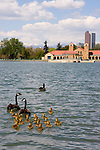 City Park and Canada Geese, Denver, Colorado, USA