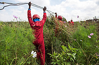 Members of the Red Ants clear illegal electricity connections in an informal settlement near KwaThema. <br />The Red Ants are a controversial private security company often hired to clear squatters from land and so-called 'hijacked' properties.