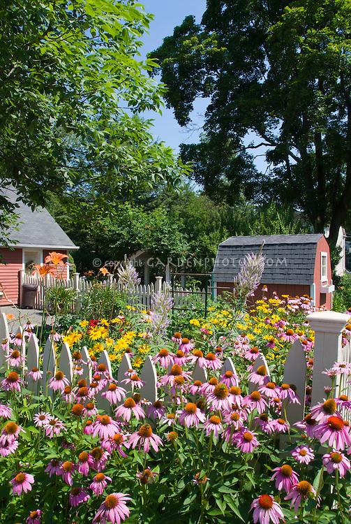 Summer flower garden with Echinacea purpurea purple coneflowers, Heliopsis, Veronicastrum Fascination, Hemerocallis orange daylilies, barn, blue sky on sunny day, perennials in lush bloom