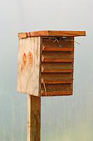 Bee hive for pollinating chilli peppers, South Devon Chilli Farm.
