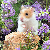 Xavier, ANIMALS, REALISTISCHE TIERE, ANIMALES REALISTICOS, photos+++++,SPCHHAMSTER183,#A#, EVERYDAY ,funny