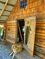 Cabin at Lake George with dog in doorway. Alaska