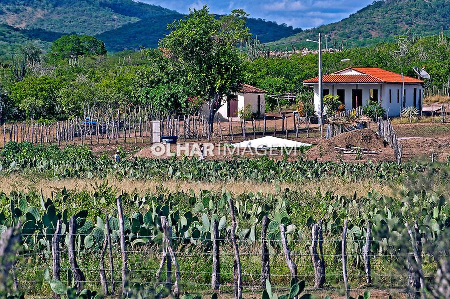 Casa e criaçao de palma no municipio de Serra Preta. Bahia. 2015. Foto de Sergio Amaral.