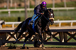 OCT 25: Nolde works out for the Twilight Derby at Santa Anita Park in Arcadia, California on Oct 25, 2019. Evers/Eclipse Sportswire/Breeders' Cup