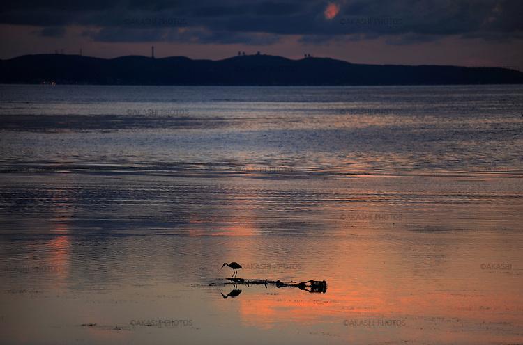 Bird, heron, in Cape Soya, the northernmost point of Japan very close to Sakhalin, Rusia.<br /> <br /> Oiseau, héron, au cap Soya, la pointe la plus septentrionale du Japon très proche de Sakhaline, Russie.