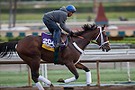 OCT 26 2014:Unbridled Forever, trained by Dallas Stewart, exercises in preparation for the Breeders' Cup Distaff at Santa Anita Race Course in Arcadia, California on October 26, 2014. Kazushi Ishida/ESW/CSM