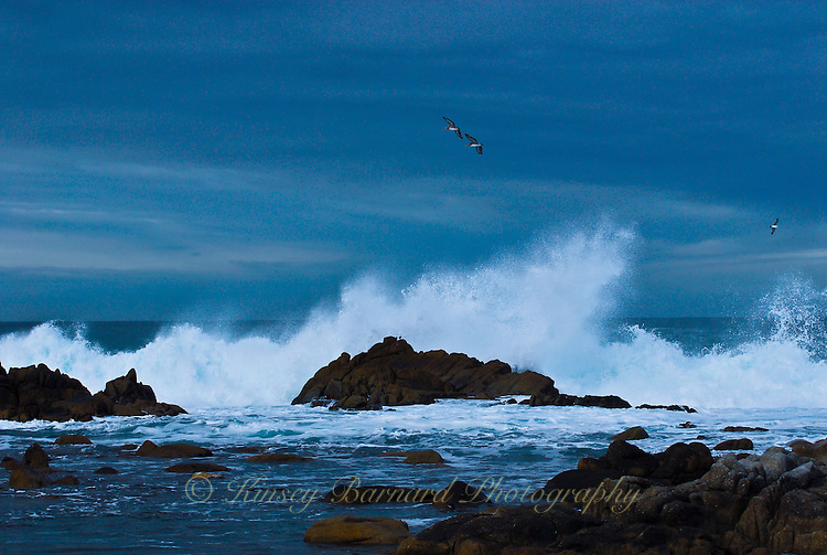 """""""BACK TO SEA""""<br /> <br /> Sensing the storm is nearly ended a pair of California Brown pelicans head back out to sea gliding over waves smashing on rocks near Monterey Bay."""
