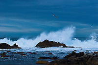 """BACK TO SEA""<br />