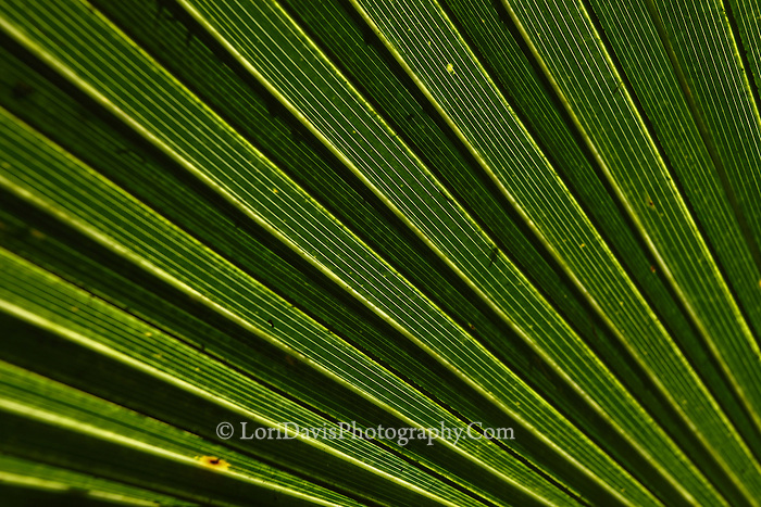 Palm Fronds 2
