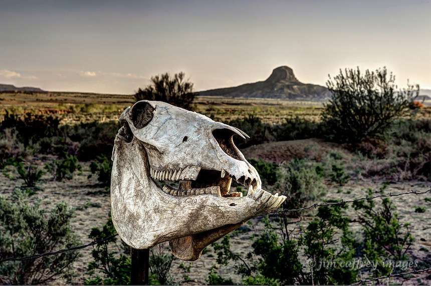 Horse skull on a fence with Cabezon Peak in the bacground