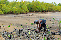 KENYA, Mombasa, Jimbo, planting of mangroves as coast protection / KENIA, Diakonie Projekt Kuestenschutz und Katastrophenprevention in der Kuestenregion bei Mombasa , Ort Jimbo , Mangrovenanpflanzung