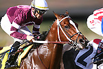 15 January 2011: Tapizar and Garrett Gomez the first time by in the Sham  Stakes at Santa Anita Park, Arcadia, CA.