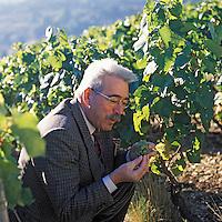 """Europe/France/89/Yonne/Joigny: Michel Lorrain dans ses vignes """"Vins de la Cote Saint Jacques"""""""