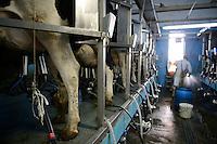 ROMANIA Transilvania, Voila, milk cow farm of CarmOlimp / RUMAENIEN Siebenbuergen, Voila, Milchviehbetrieb CarmOlimp, Melkstand