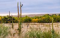 West Bijou Ranch