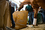 HALLANDALE BEACH, FL-JANUARY 28: Gun Runner rides the trailer at Gulfstream Park Race Track on January 28, 2018 in Hallandale Beach, Florida. (Photo by Kaz Ishida/Eclipse Sportswire/Getty Images)
