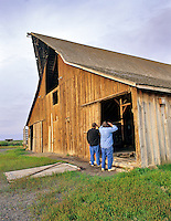 Two men looking at birds inside barn. Summer Lake State Wildlife Refuge, Oregon