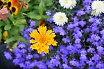 Bright flowers in Yellowknife garden